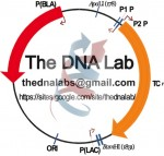 TheDNALab